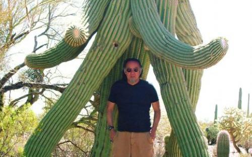 Frost in the winter makes the saguaro arms droop