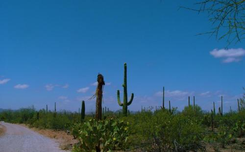 Blue skies and the Sonoran Desert