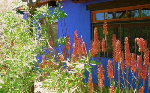 aloe growing outside the Hacienda